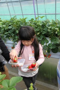 Strawberry picking field trip 2014 HUGE Canon 2024