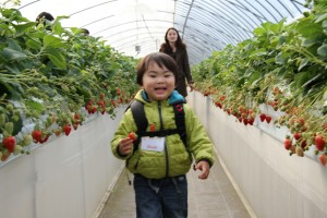 Strawberry picking field trip 2014 HUGE Canon 2055