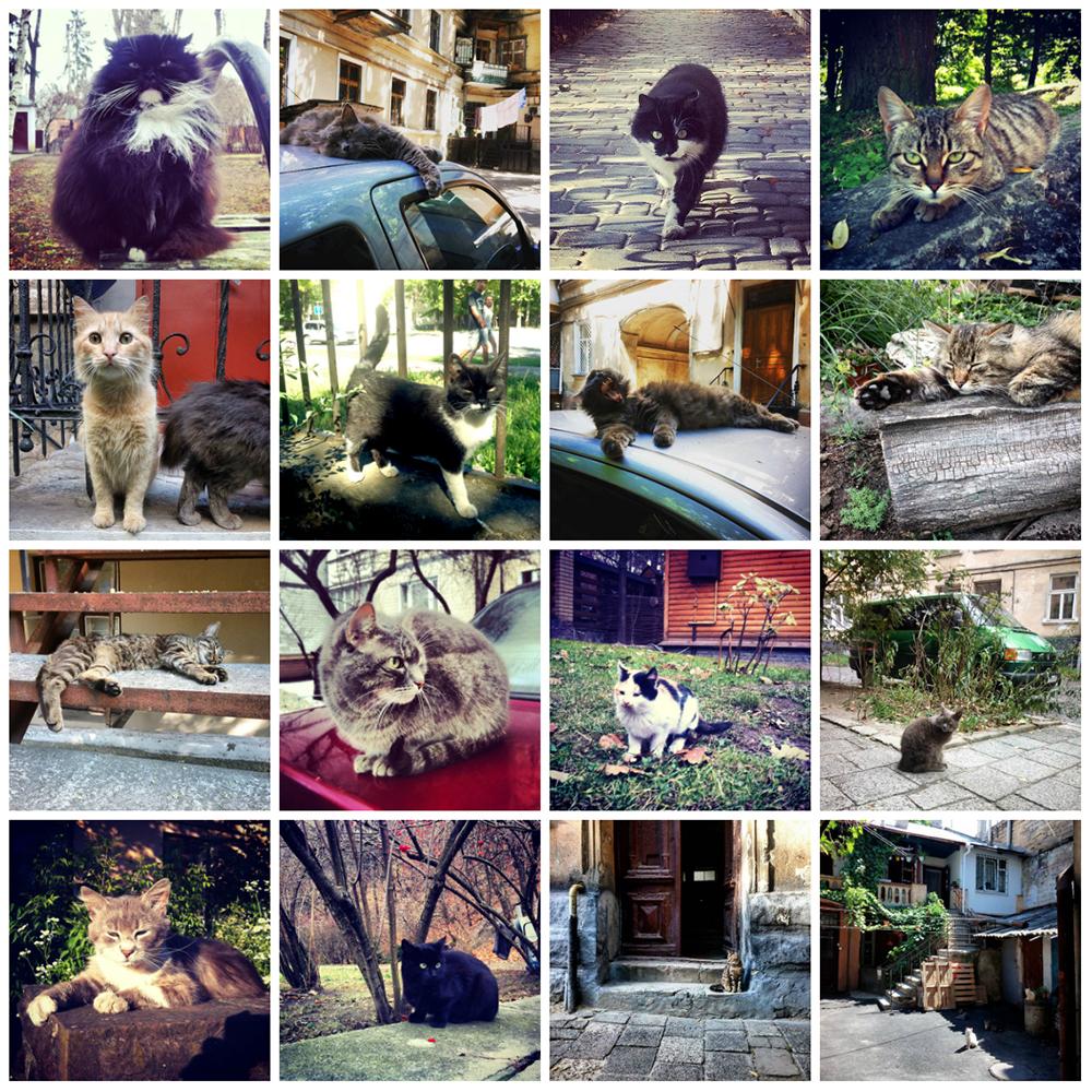 cat_travel