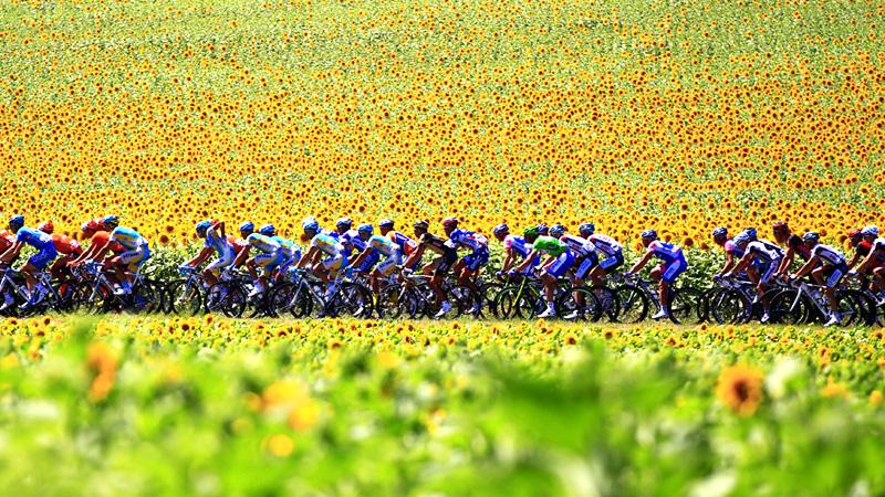 Велосипедисты в подсолнухах