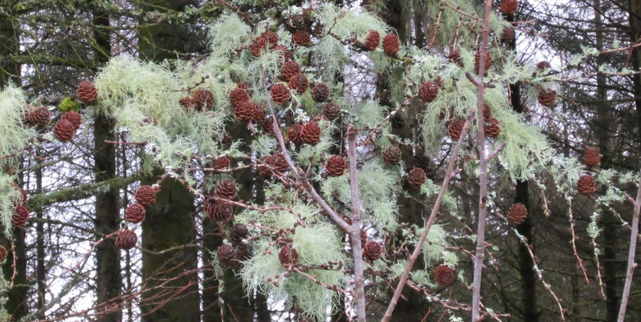 Moss and pine cones