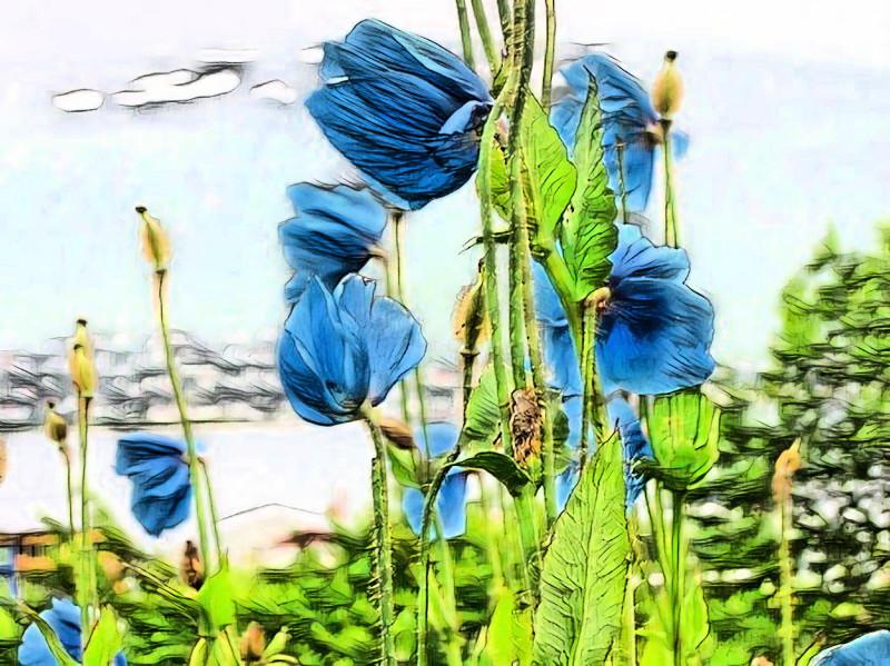 Ты источаешь сложный, многогранный аромат-недосказанность, утренней росы стекающей по голубым гималайским макам.