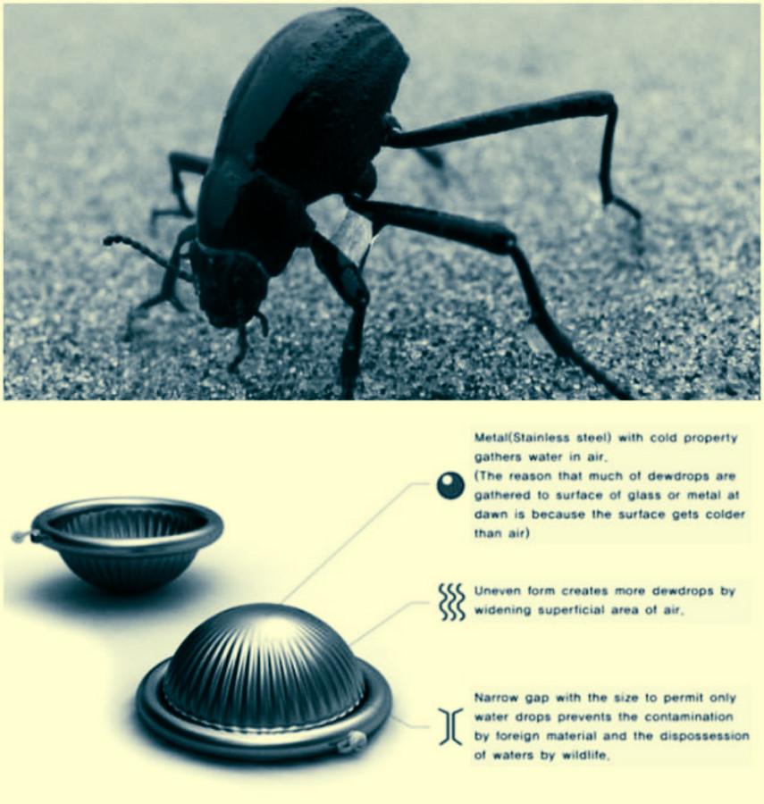 Спина намибийского жука подсказала людям решение проблемы нехватки воды в пустыне.