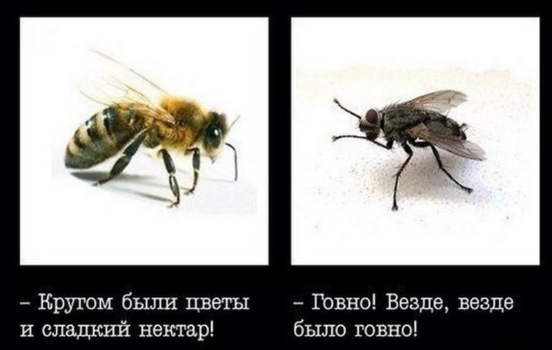 Fly&Bee