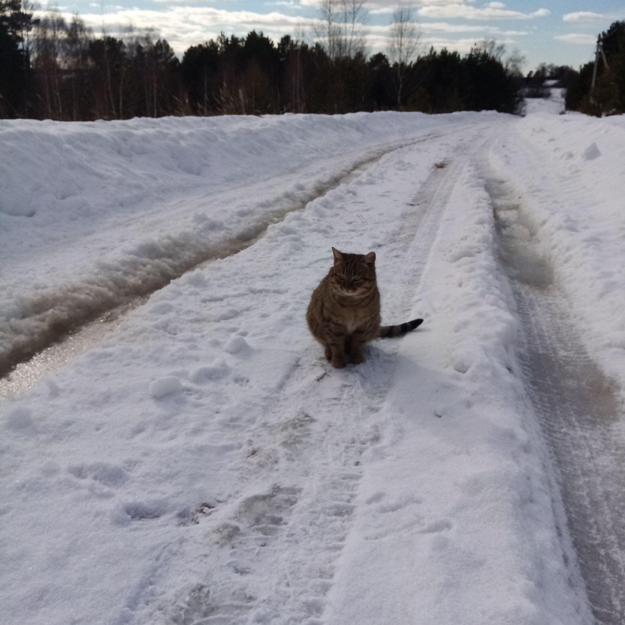 Первомартовский котик на весеннюю охоту вышел