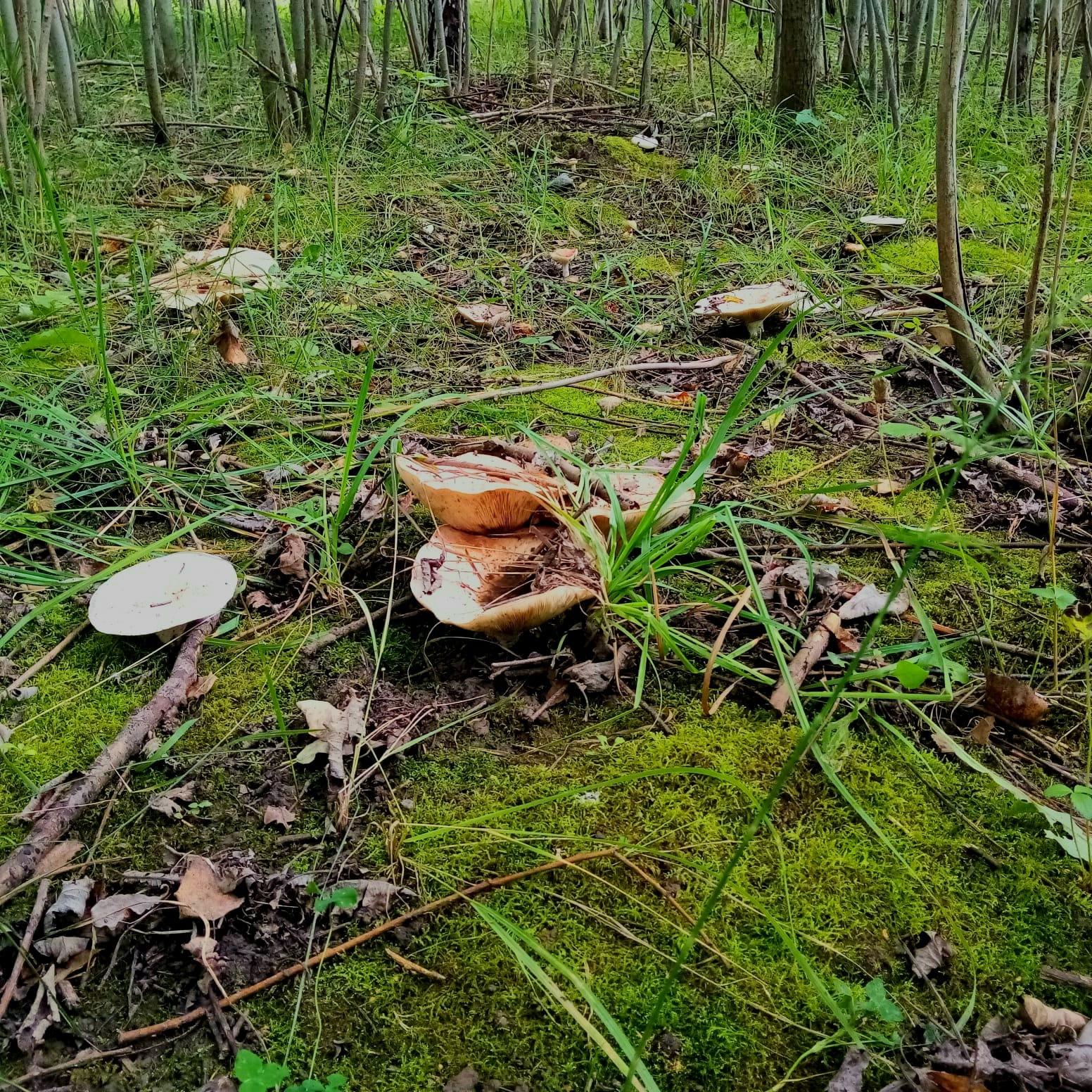 Тучка появилась, в лесу сумрачно становиться.