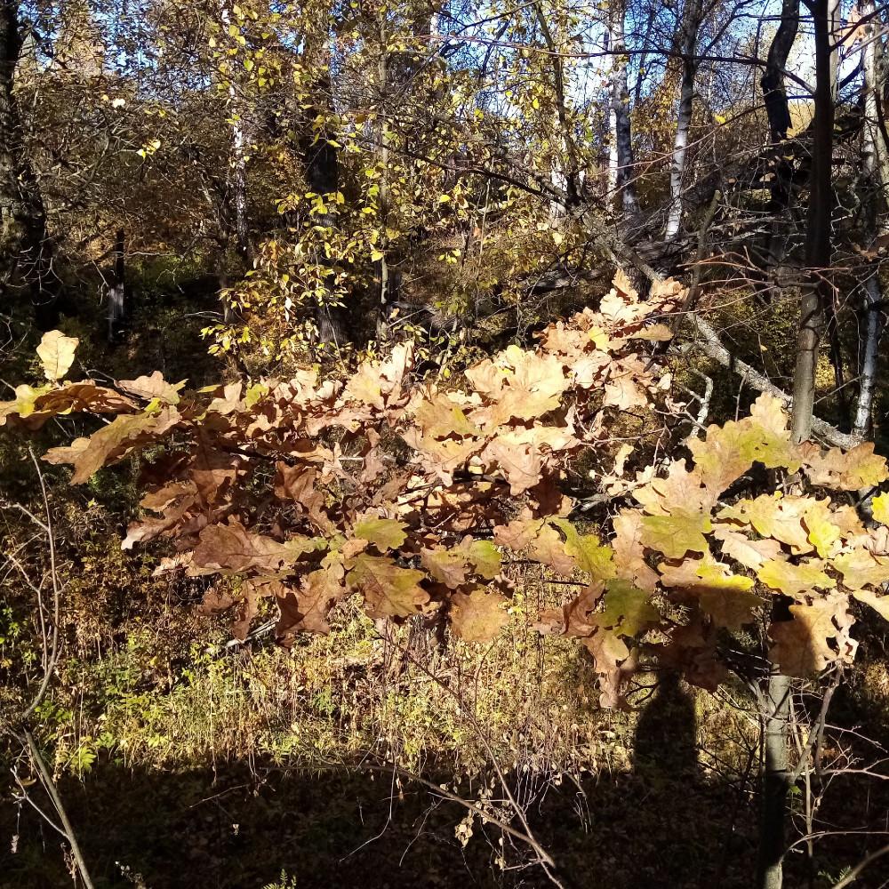 Октябрь золотая осень