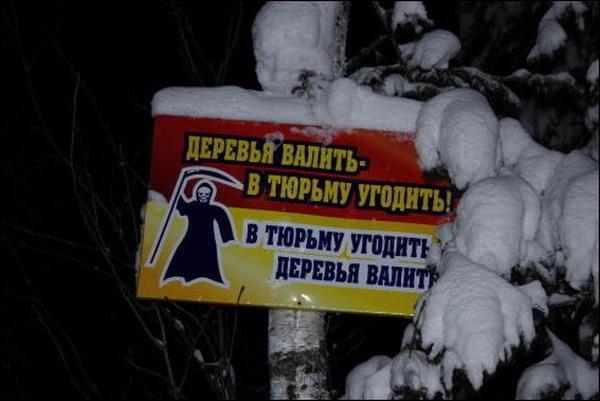 derevya_valit