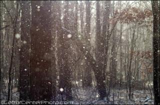 Prejudice and discrimination snow falling cedars