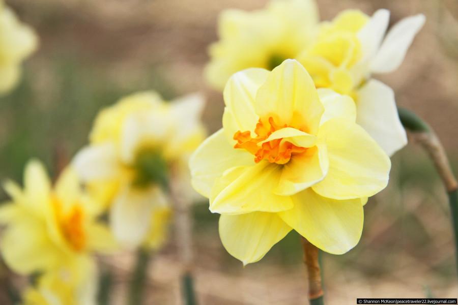 tulip14_PM