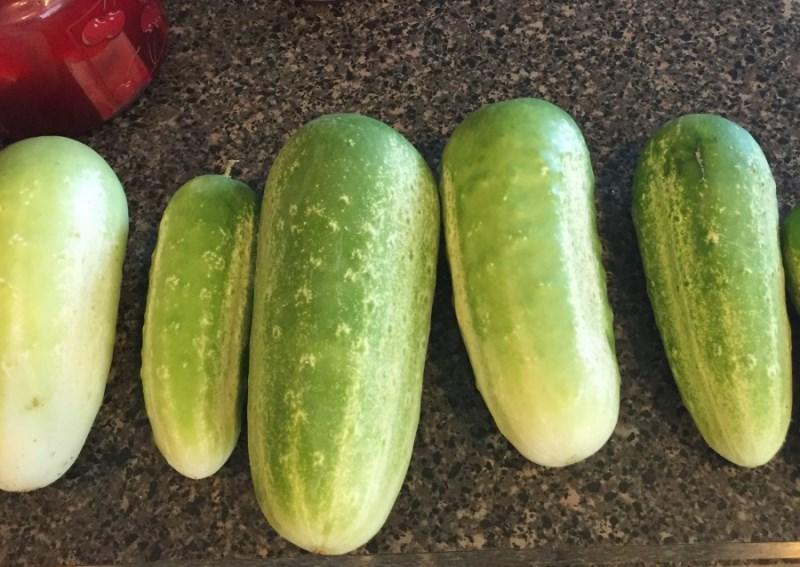 cucumber9 (1)