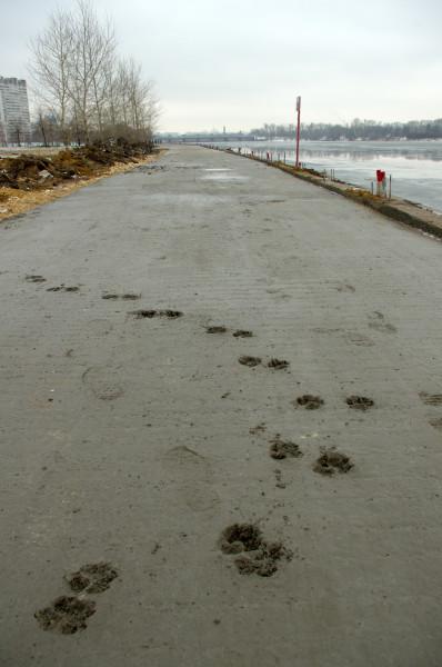 nabarezhnaya-beton-sobaka