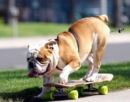 собака-гулять