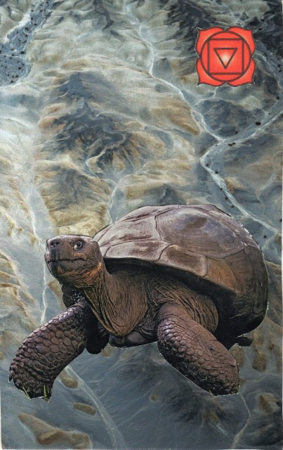 The Tortoise (First Chakra) - Companion Suit
