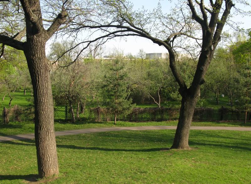 Парк Трубецких (бывший сад Мандельштама) недалеко от главного корпуса МГПИ-МПГУ.