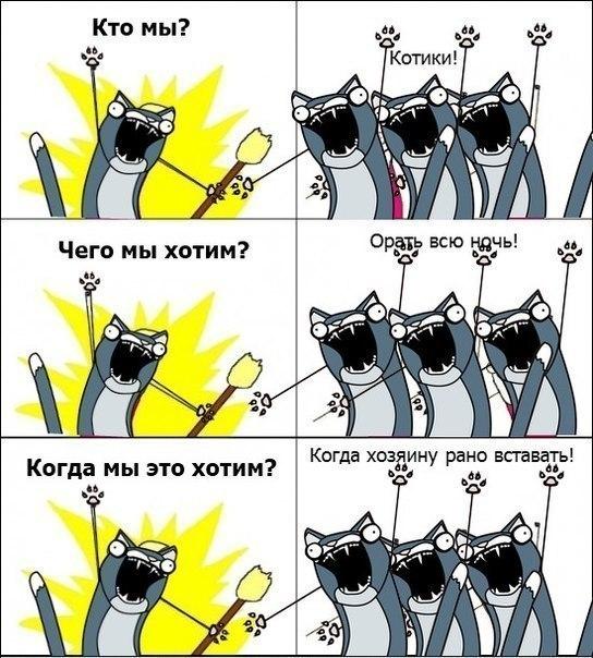 мы_котики