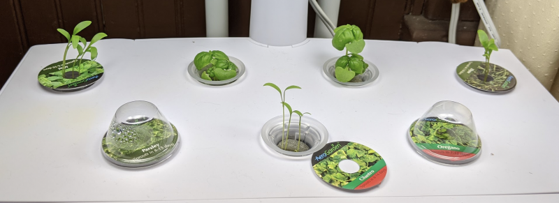 Herbs from recent seed packets, 3 weeks in AeroGarden.