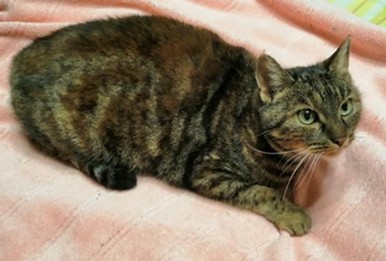 Необычная кошка Мура. Москва