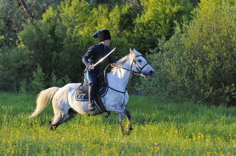 Картинки казаков скачущих на конях