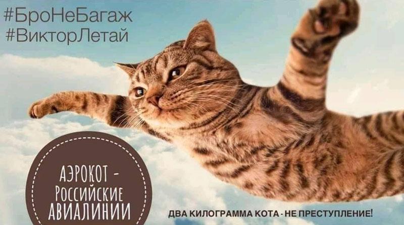 Кот Виктор и Аэрофлот