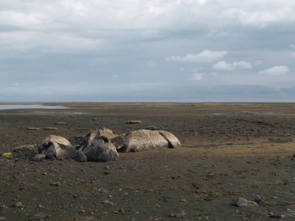 Рыбинское берег