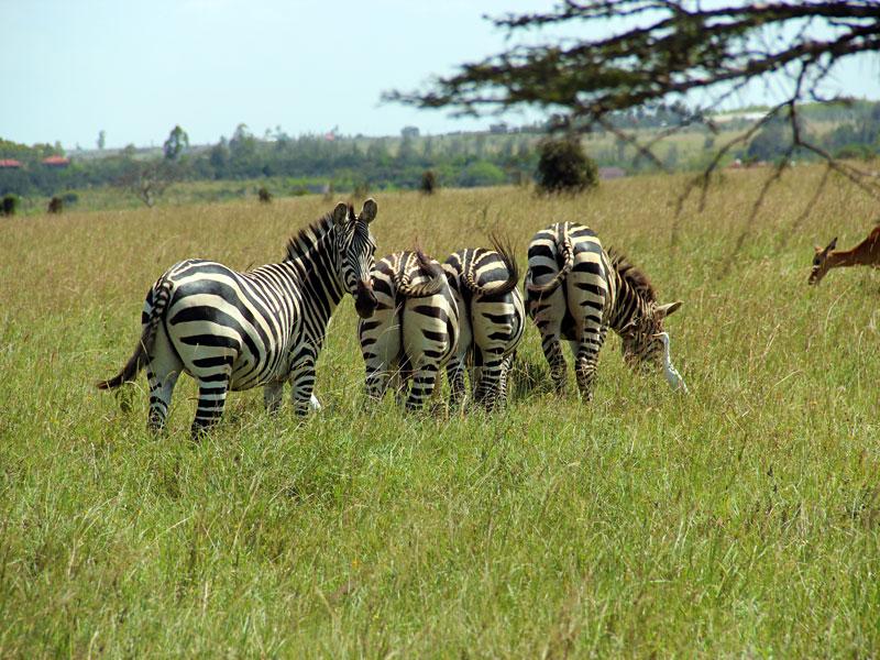 070-Национальный-парк-Найроби