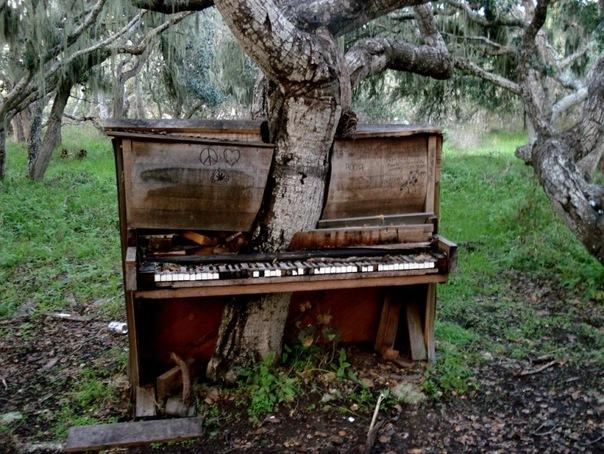 дерево сквозь пианино