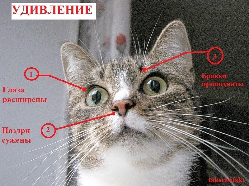 отличают ли коты запах хозяина все