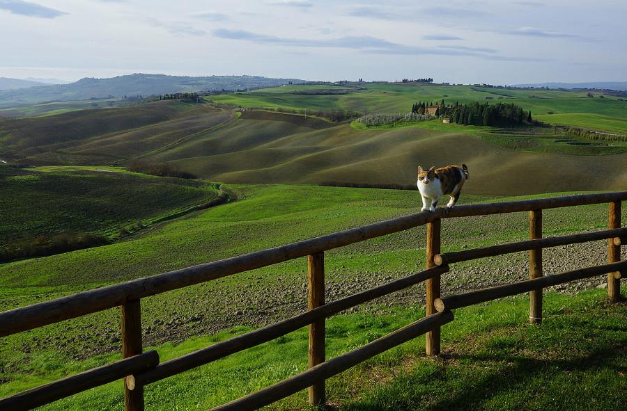 Тоскана, Tuscany , Agriturismo Bonello (3)