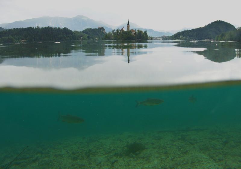 Озеро Блед, Словения (14).jpg