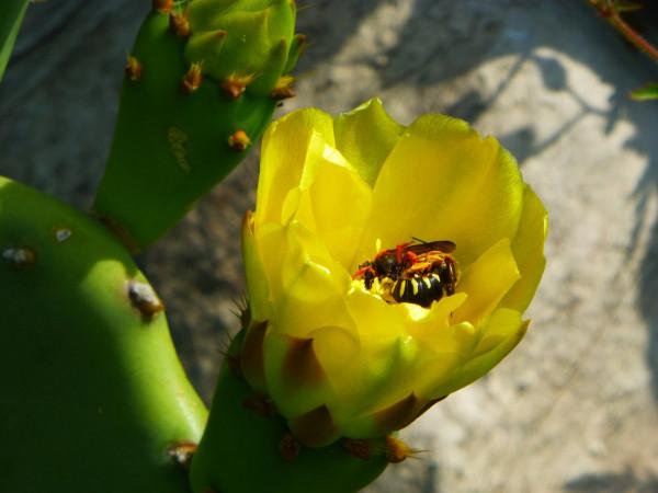 P1030147 bee 30% miniscule