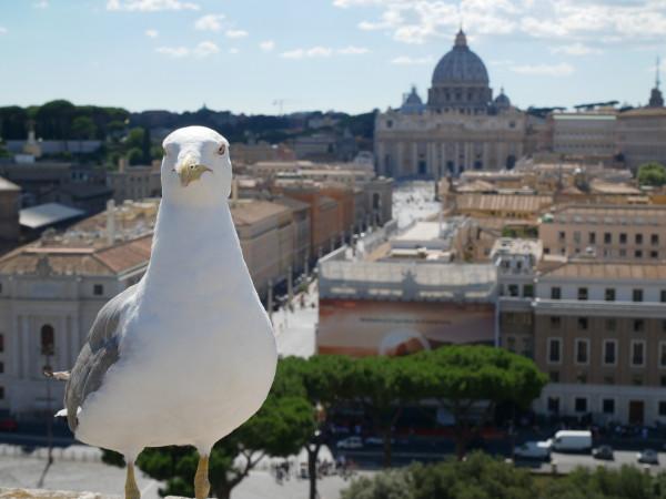 rome_seagull