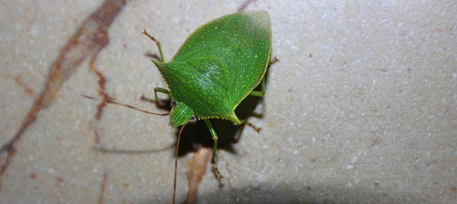 очная бабочка 054