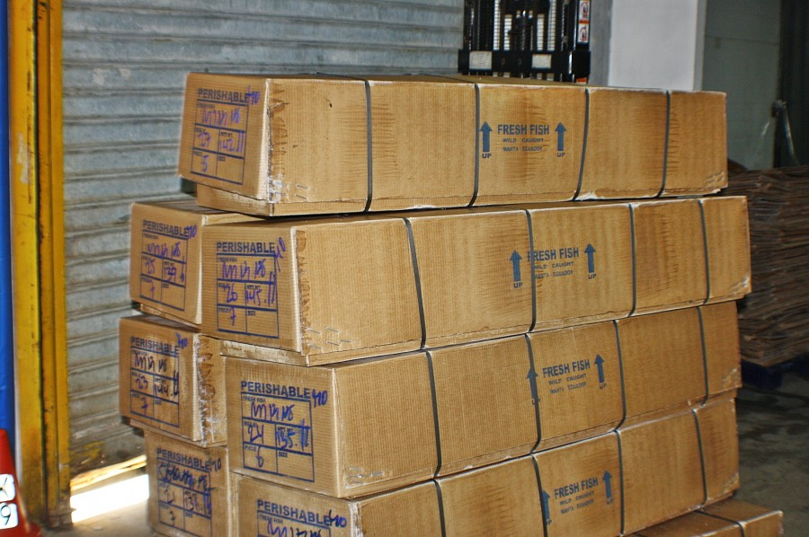 ящики с тунцом свежим