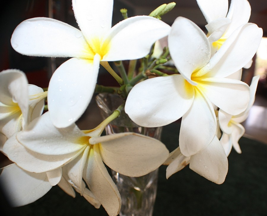 цветок 004