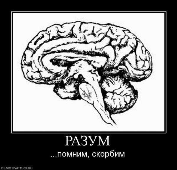 375165_razum