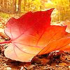 pfodge-fall 113