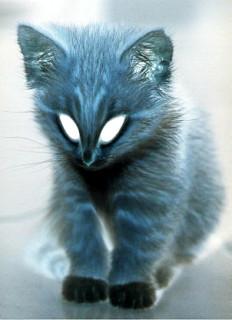 alien kitty =:D