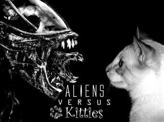 Bugs vs kitty witties