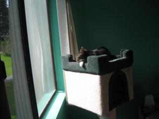 Tiggy in the Sun
