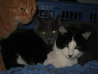 Mel, Supervisor Grey, Tubby