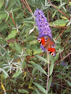 08 - Butterfly at work