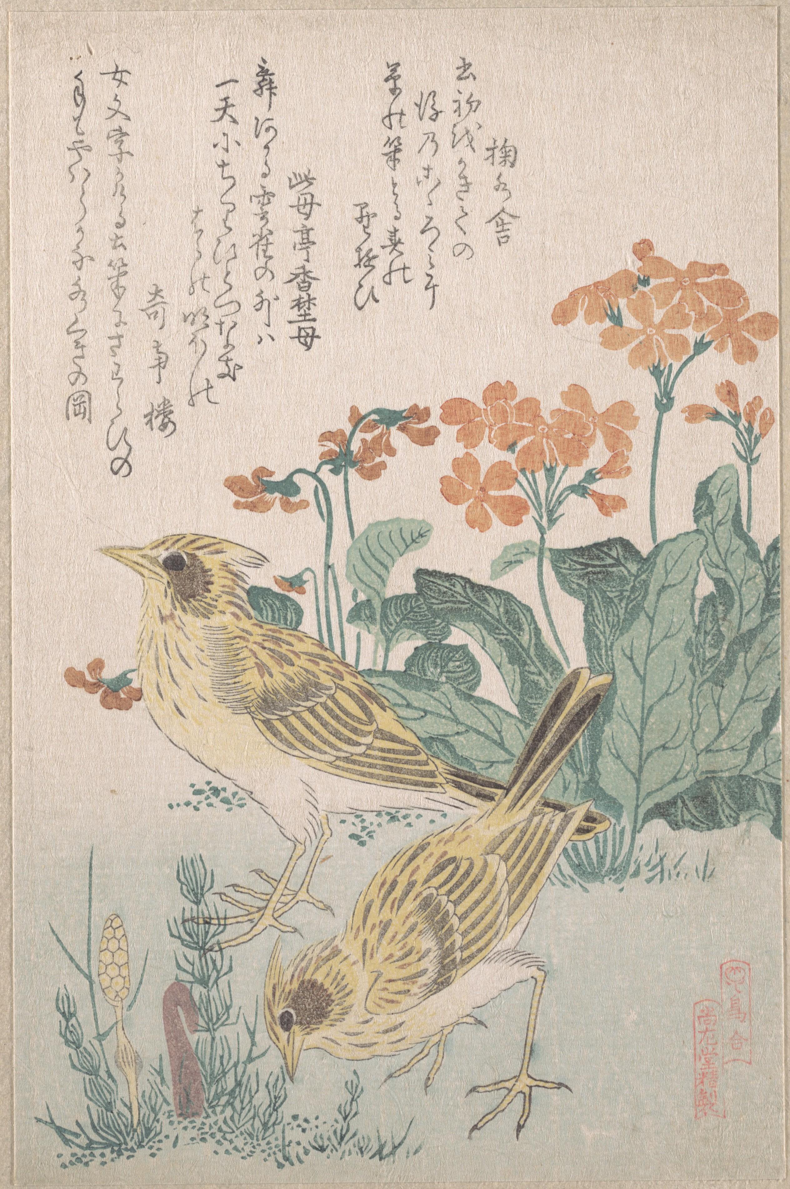 Series An Array of Birds_том 3_1805-1810_Жаворонки и первоцветы_210х137 мм