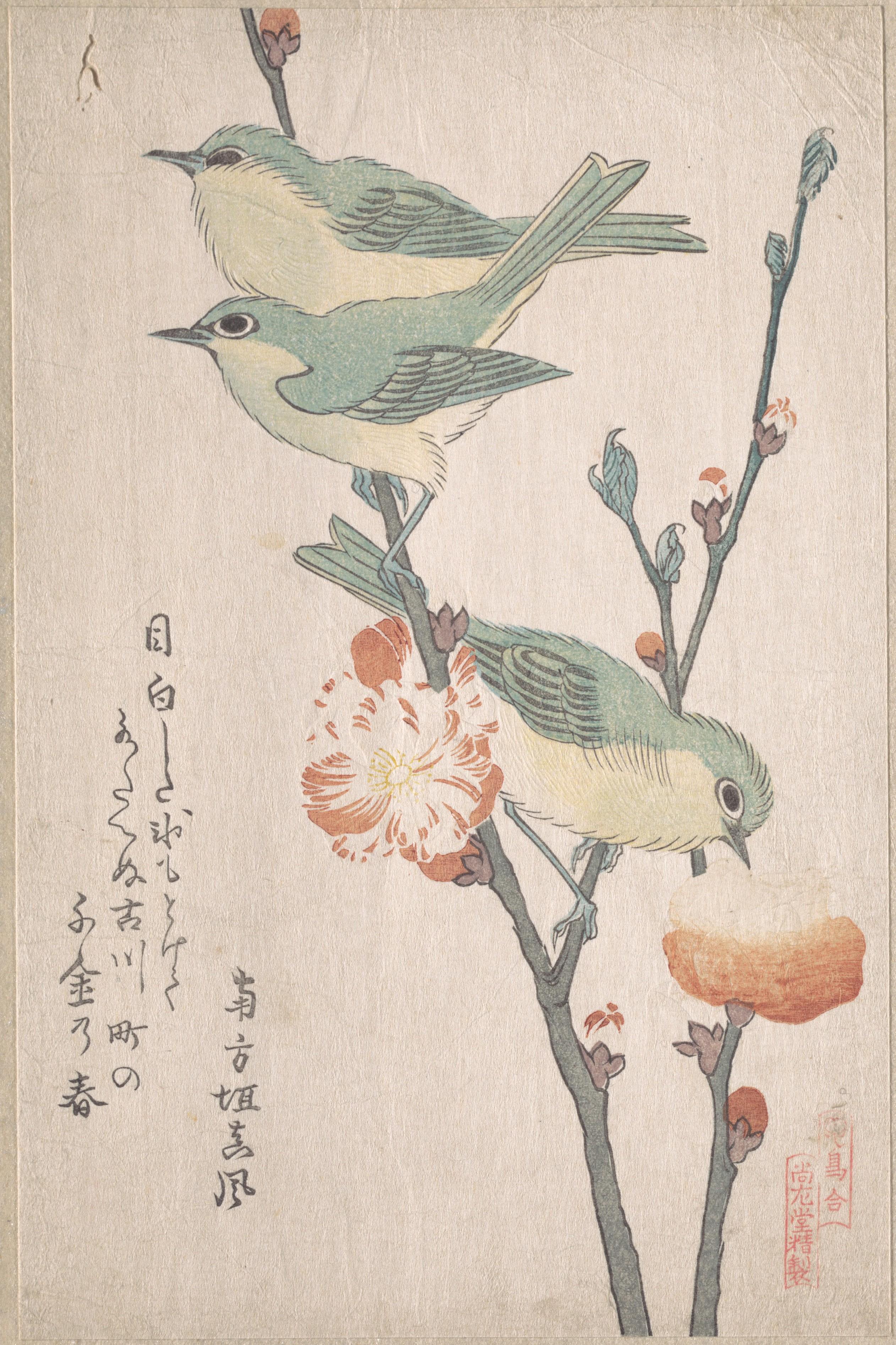 Series An Array of Birds_том 3_1805-1810_Японская белоглазка на персиковом дереве_208х137 мм