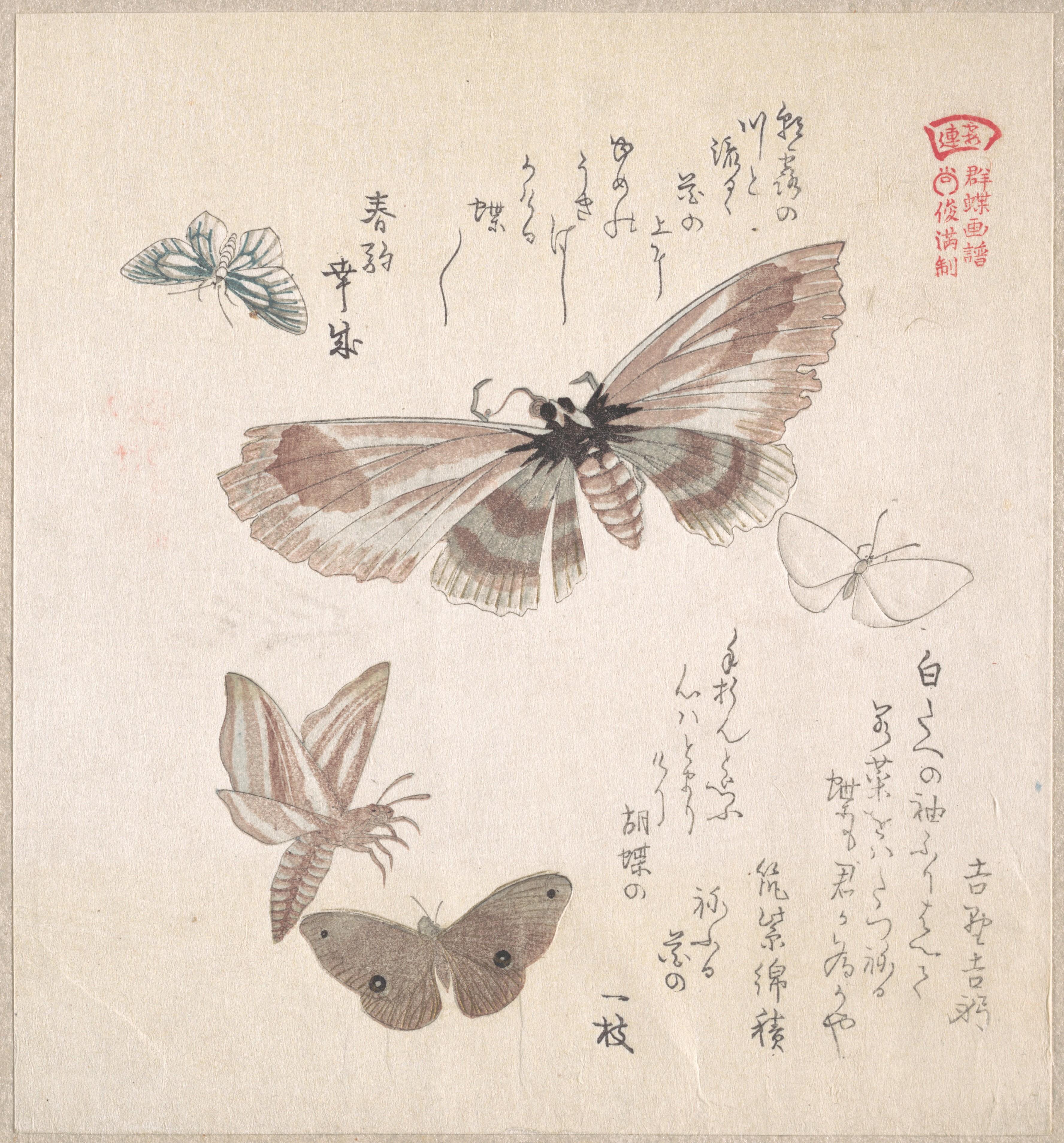 Бабочки и различные мотыльки_197х183 мм