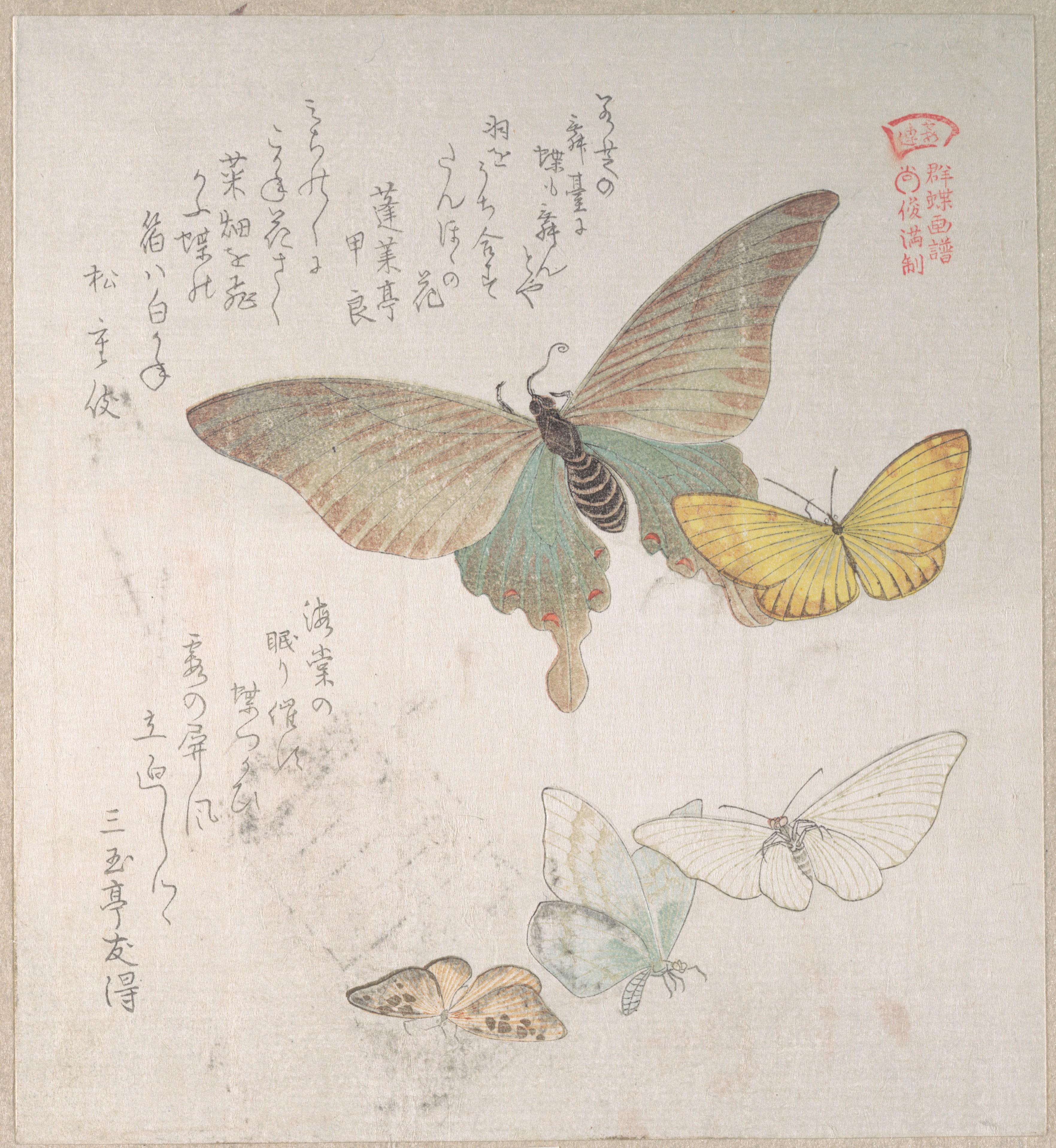 Бабочки и различные мотыльки_198х191 мм