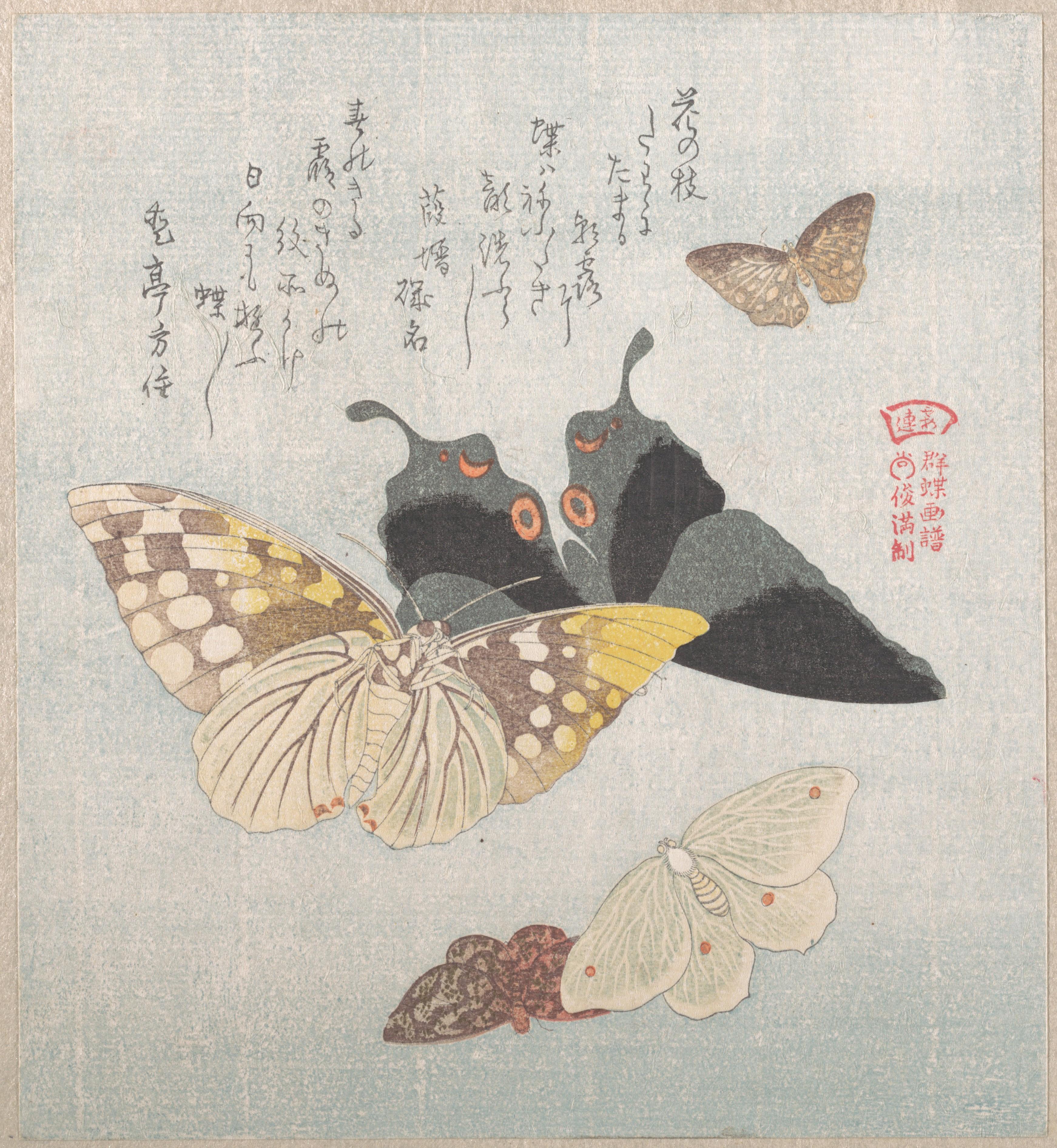 Бабочки и различные мотыльки_200х181 мм