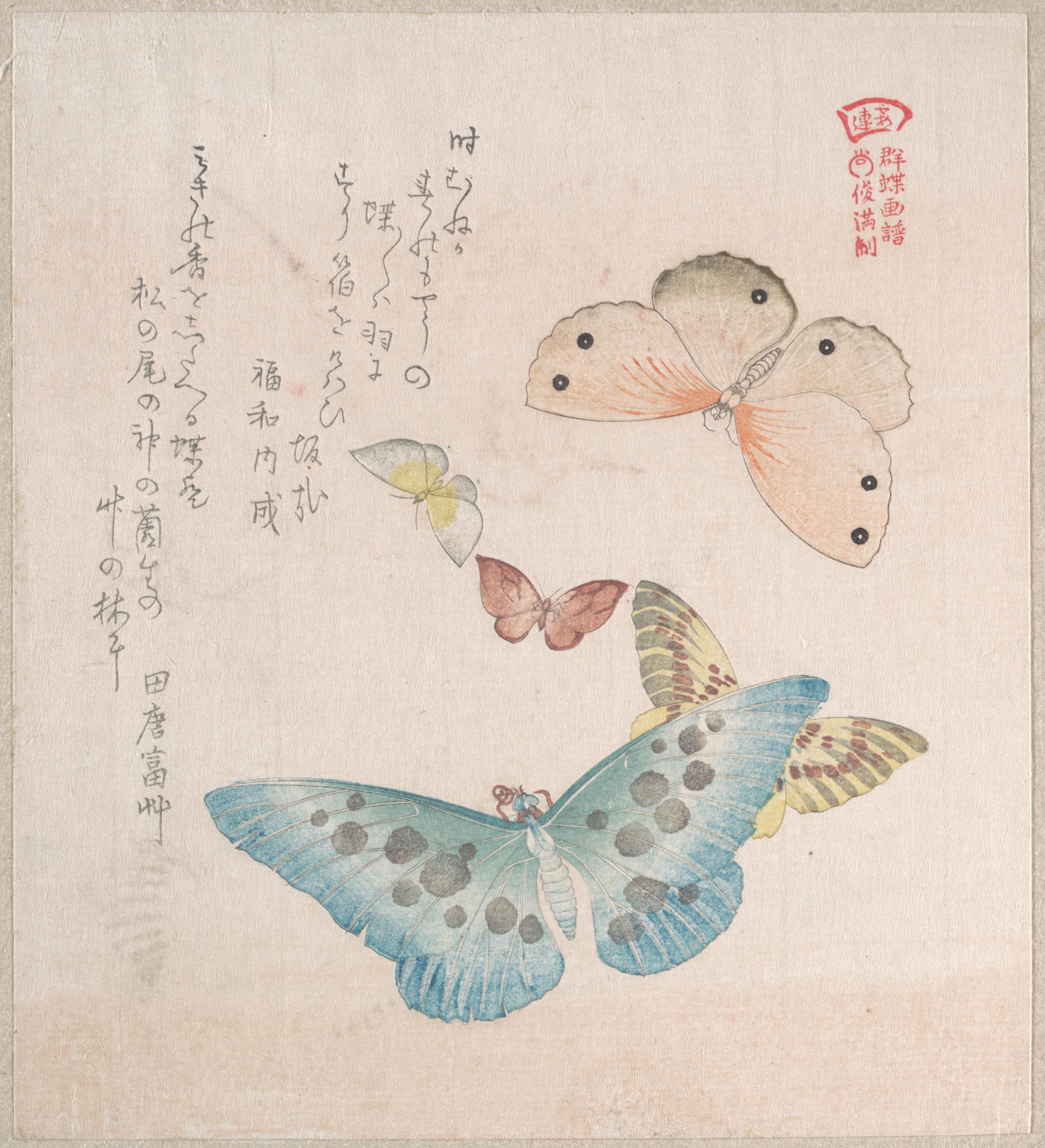Бабочки и различные мотыльки_203х184 мм