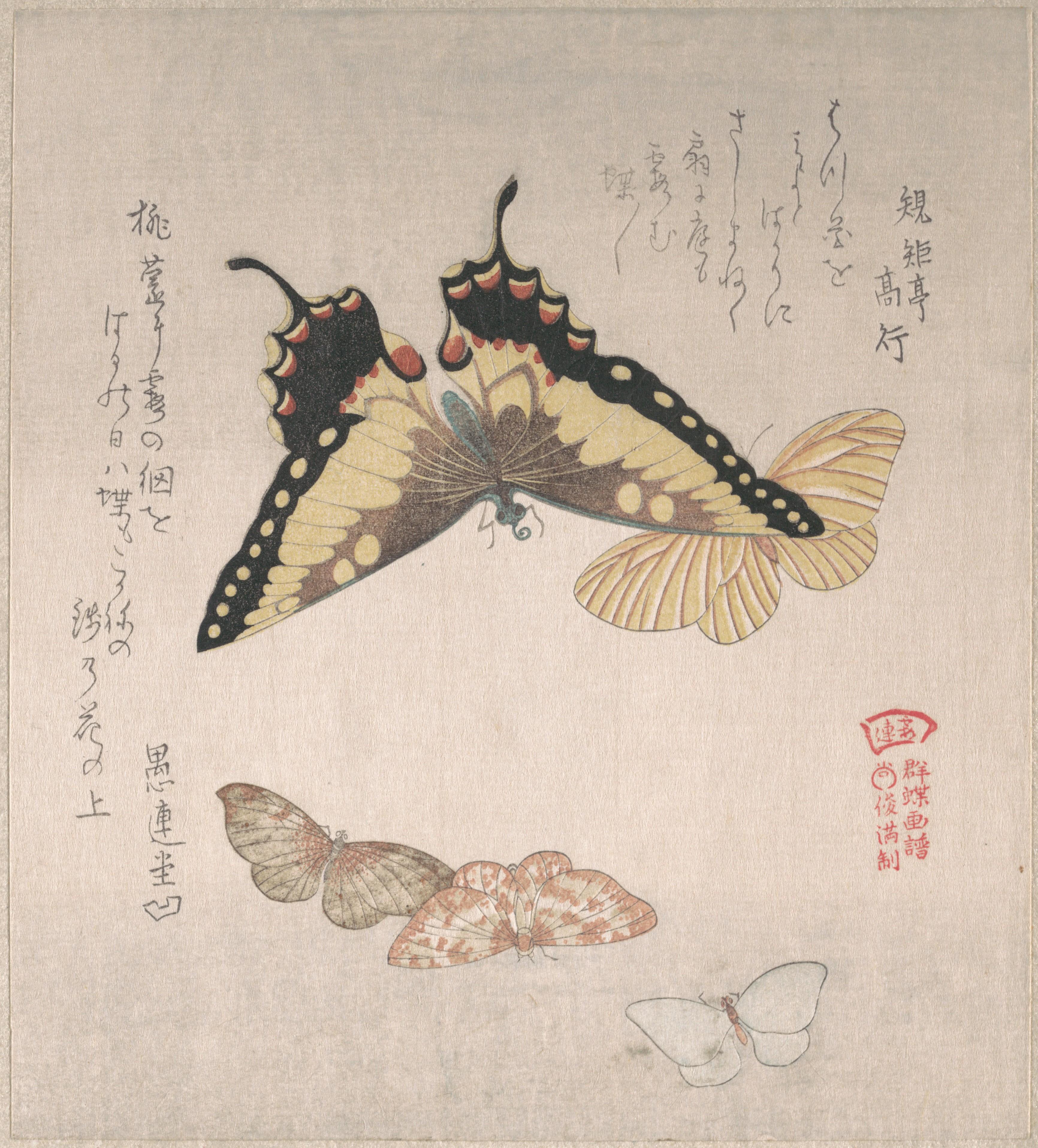 Бабочки и различные мотыльки_XIX в_202х181 мм