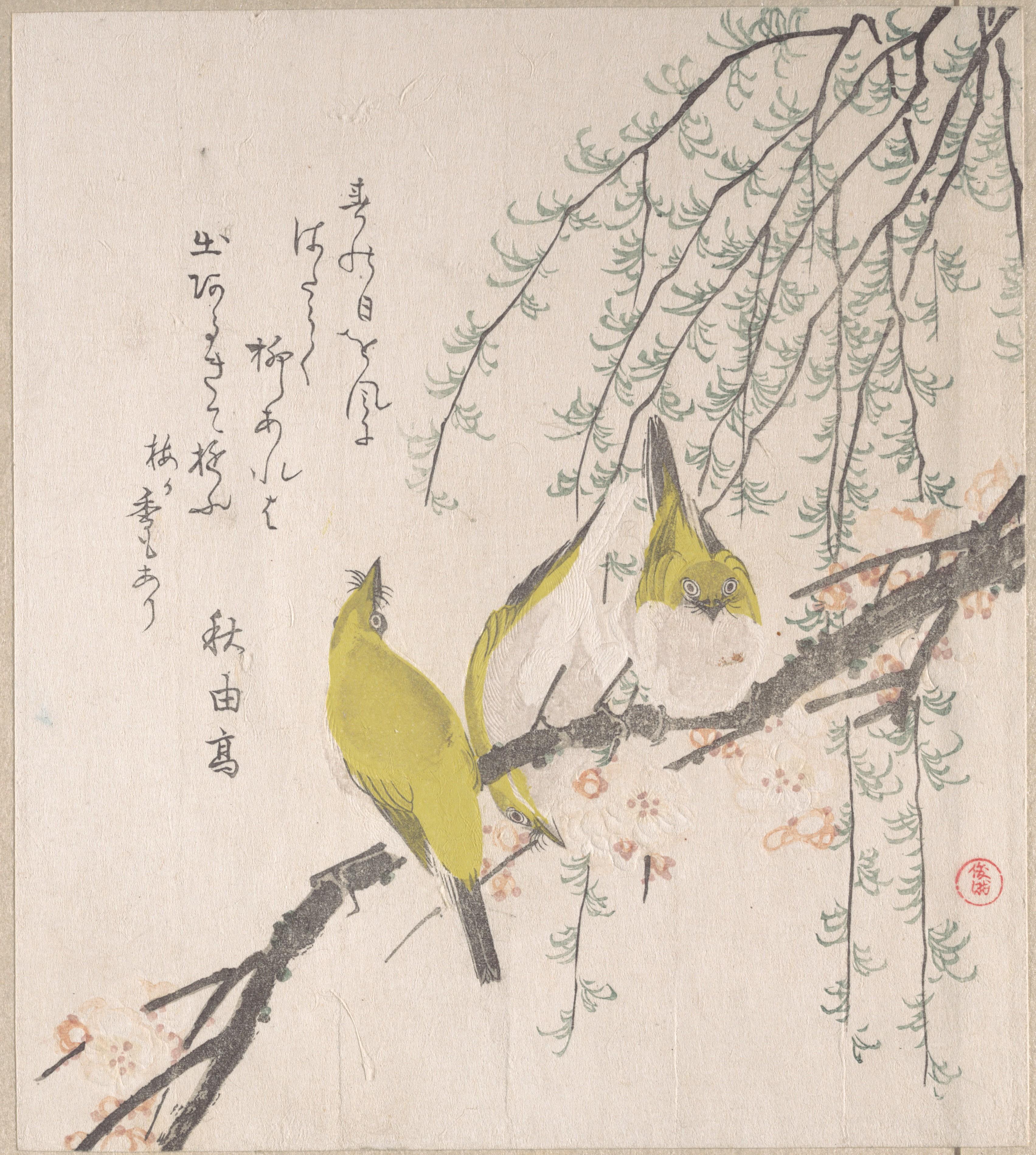 Из альбома Весенний дождь_том 3_1805-1810_Японские белоглазки на ветке сливы и ива_210х186 мм